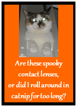 Cat With Spooky Eyes